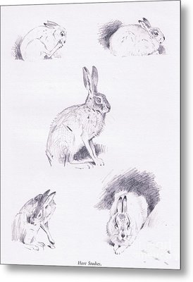 Hare Studies Metal Print
