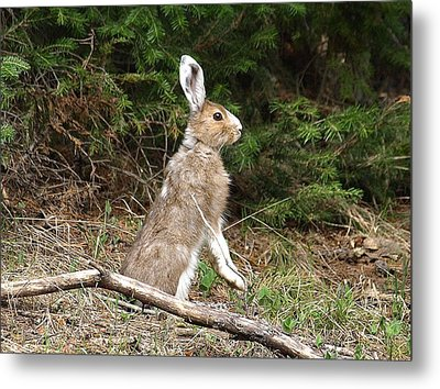 Hare That Metal Print by DeeLon Merritt