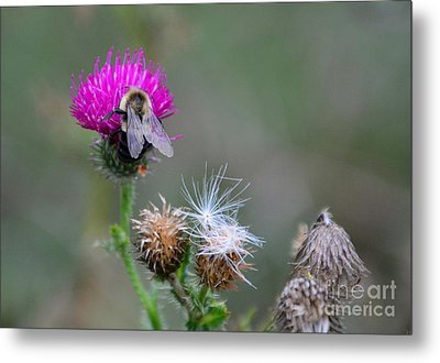 Harmony Metal Print by Cindy Manero
