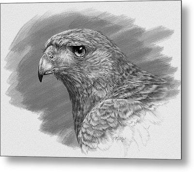 Harris Hawk Drawing Metal Print