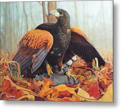 Harris Hawk  Metal Print by Ken Everett