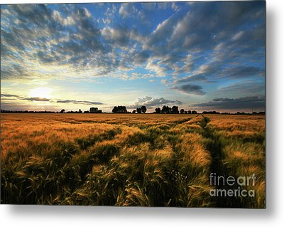 Metal Print featuring the photograph Harvest by Franziskus Pfleghart