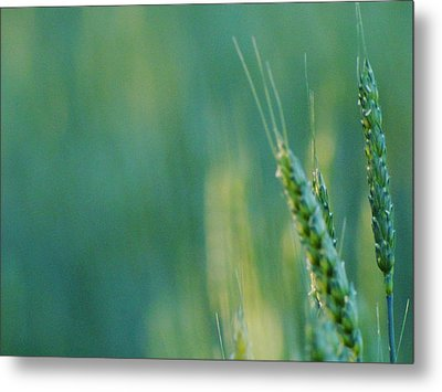 Metal Print featuring the photograph Harvest Hues by Blair Wainman