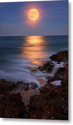 Harvest Moon Rising Over Beach Rocks On Hutchinson Island Florida During Twilight. Metal Print