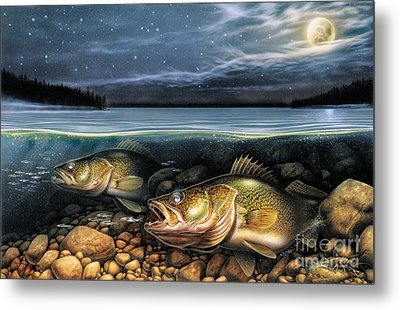 Harvest Moon Walleye 1 Metal Print by JQ Licensing