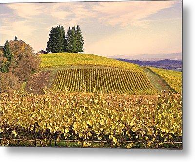 Harvest Time In A Vineyard Metal Print by Margaret Hood