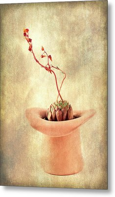 Hat And Echeveria  Metal Print by Catherine Lau