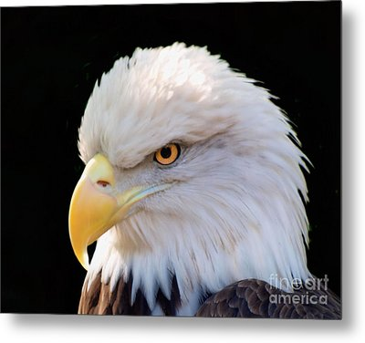 Metal Print featuring the photograph Have My Eye On You by Ken Frischkorn
