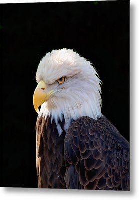 Metal Print featuring the photograph Have My Eye On You Two by Ken Frischkorn
