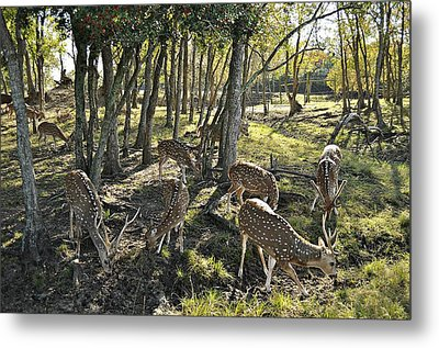 Metal Print featuring the photograph Haven by John Collins