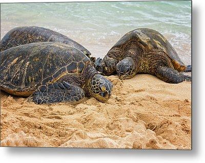 Hawaiian Green Sea Turtles 1 - Oahu Hawaii Metal Print