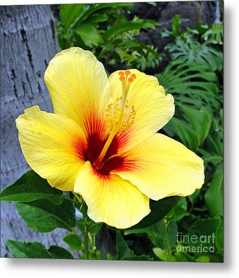 Hawaiian Hibiscus Metal Print by Sue Melvin