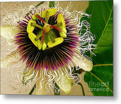 Hawaiian Lilikoi Metal Print by James Temple