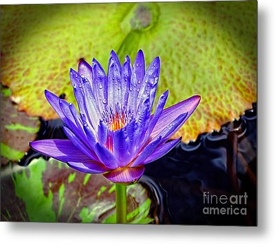 Hawaiian Water Lily Metal Print by Sue Melvin