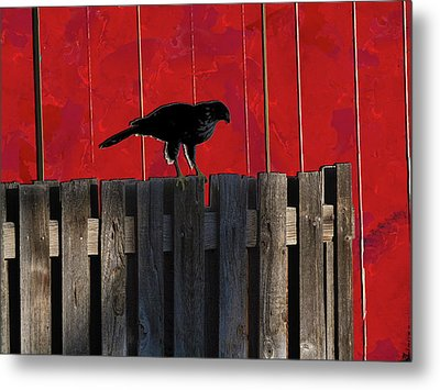 Hawk Metal Print by Don Gradner