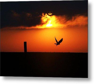 Hawk Rising With The Sun Metal Print by Clarice  Lakota