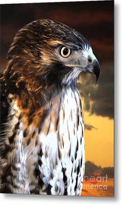 Hawk Sunset Metal Print by Adam Olsen