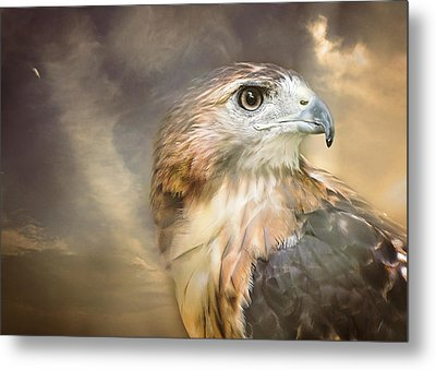Hawkeyed Metal Print by Heather Applegate