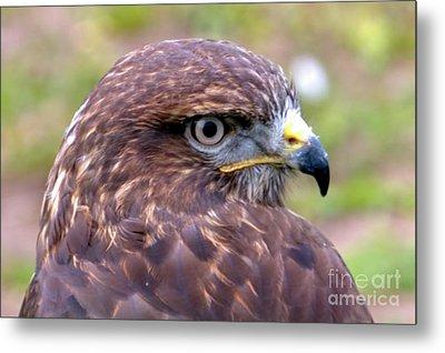 Hawks Eye View Metal Print by Stephen Melia
