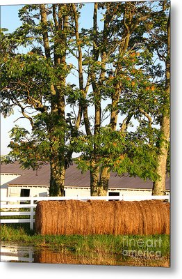 Hay Bales And Trees Metal Print by Todd A Blanchard