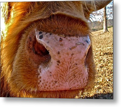 Hay You Smell Good Metal Print by Lori Miller