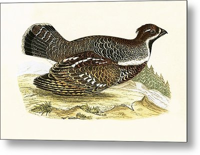 Hazel Grouse Metal Print by English School