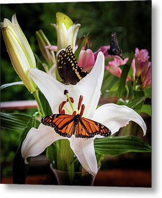 Metal Print featuring the photograph He Still Gives Me Butterflies by Karen Wiles