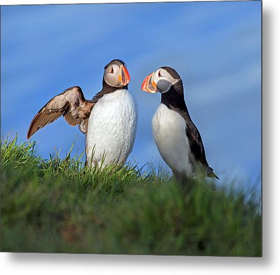 He Went That Way Metal Print by Betsy Knapp