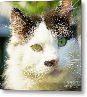 Head Of Cat Metal Print