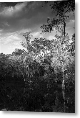 Head Waters Metal Print by Marvin Spates