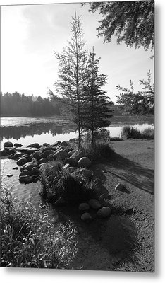 Headwaters Pine Metal Print by Christopher J Franklin