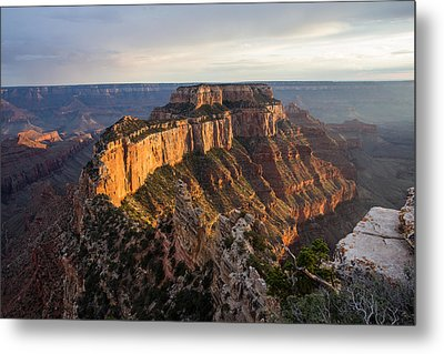 Healthy Glow Metal Print by Bill Cantey