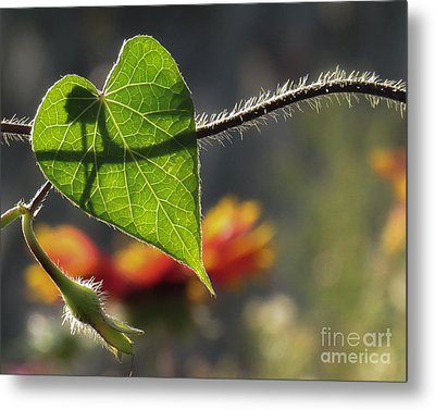 Heart Leaf 1 Metal Print