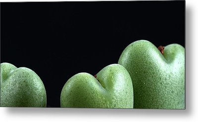Heart Shaped Lithops Metal Print by Catherine Lau