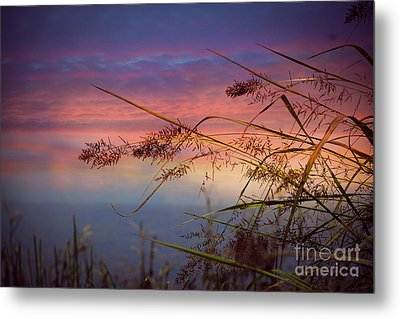 Metal Print featuring the photograph Heavenly Bliss by Brenda Bostic