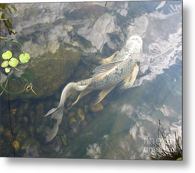 Heavenly Fish Metal Print by Laurianna Taylor