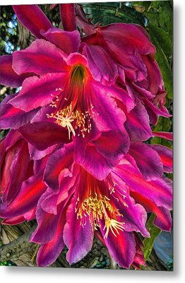Metal Print featuring the photograph Heavenly Flower by Paul Cutright