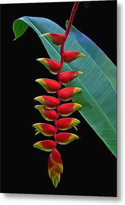 Heliconia Metal Print by Larry Linton