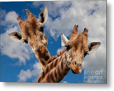 Metal Print featuring the photograph Hello by Christine Sponchia