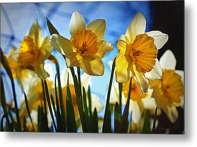 Hello Spring Metal Print by Cricket Hackmann