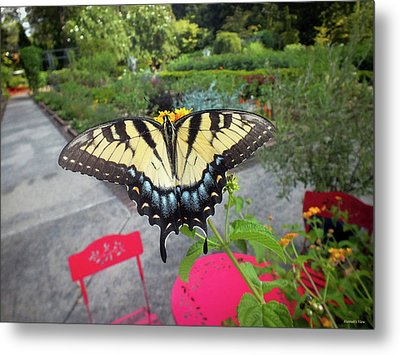 Hello Swallowtail  Metal Print