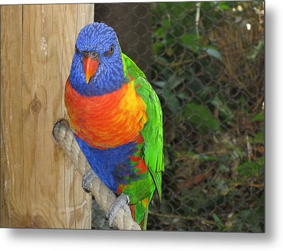 Hello Metal Print by Tammy Sutherland