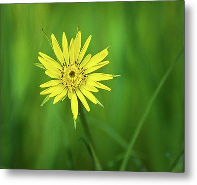 Metal Print featuring the photograph Hello Wild Yellow by Bill Pevlor