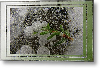 Hemlock In Bubbles Metal Print by Doug Bratten