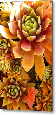 Hen And Chicks - Perennial Metal Print
