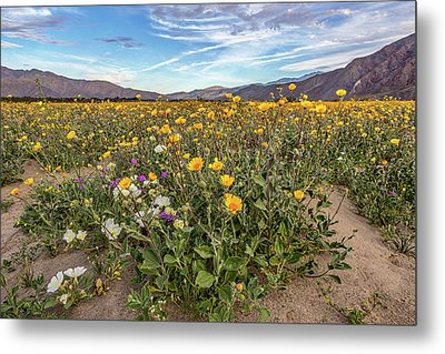 Metal Print featuring the photograph Henderson Canyon Super Bloom by Peter Tellone