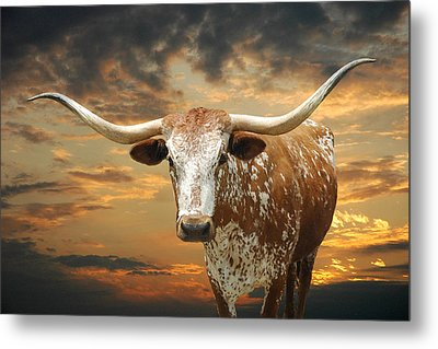 Henly Longhorn Metal Print by Robert Anschutz