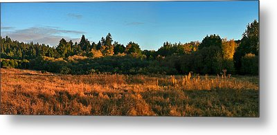 Metal Print featuring the painting Henry Cowell Sunset by Larry Darnell