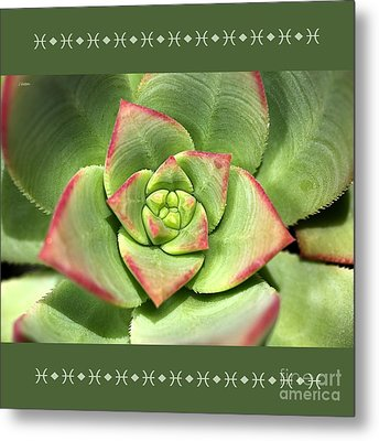 Hens And Chicks Succulent And Design Metal Print