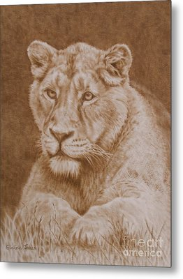 Her Majesty The Lioness Metal Print by Elaine Jones